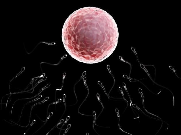 cellula-uovo