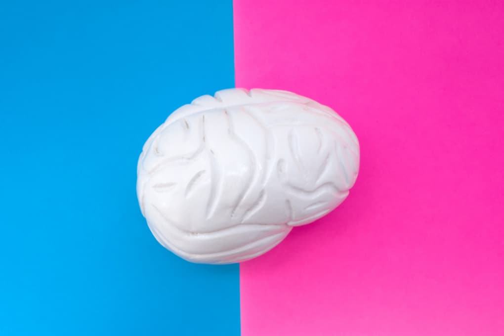 Il cervello femminile è, a parità di età, di tre anni più giovane di quello maschile