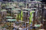 lago-vegetazione