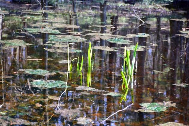 Le prime forme di vita sulla Terra? Nacquero nei laghi, non nei mari