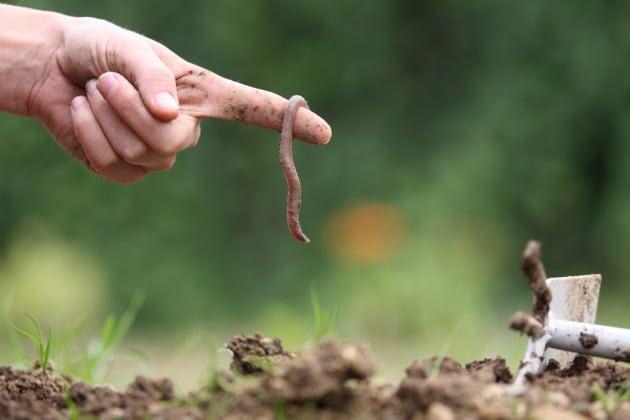 Le microplastiche nel suolo hanno effetti negativi sui lombrichi