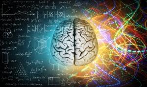 cervello umano, emisfero destro ed emisfero sinistro, creatività e logica