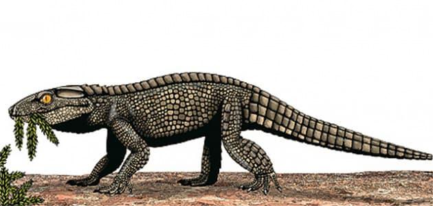 chimaerasuchus