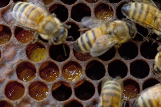 Perché i favi delle api sono fatti di celle esagonali?