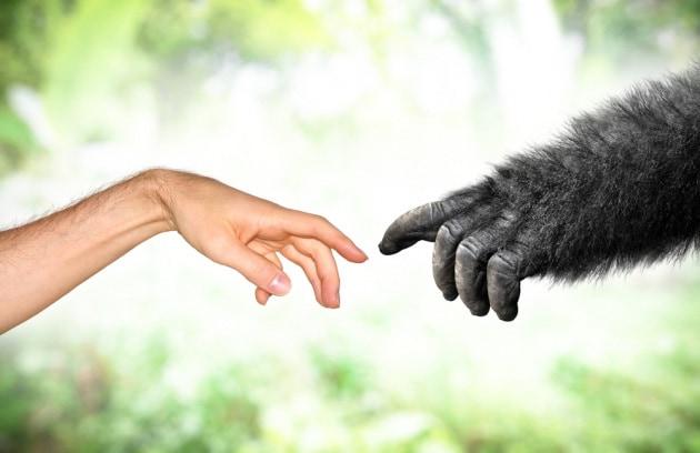 Un malloppo di geni che potrebbe spiegare l'unicità dei sapiens