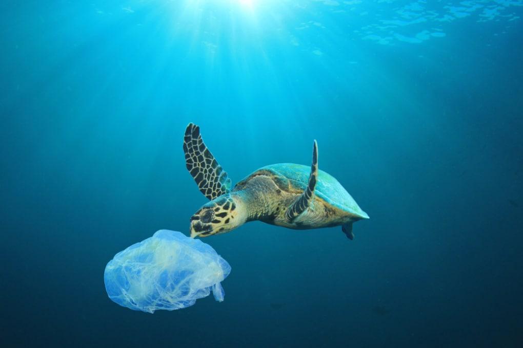 Quanto tempo impiega a degradare un sacchetto di plastica gettato in mare?