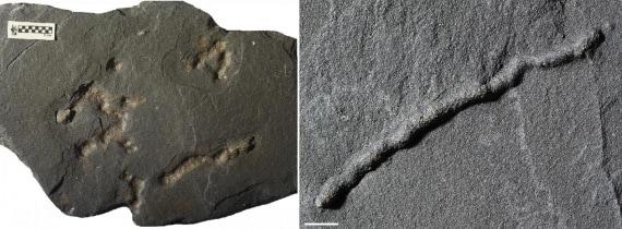 fossili, vita sulla Terra