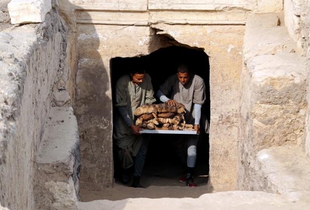 Decine di mummie di gatto e di scarabeo in 7 tombe egizie appena scoperte
