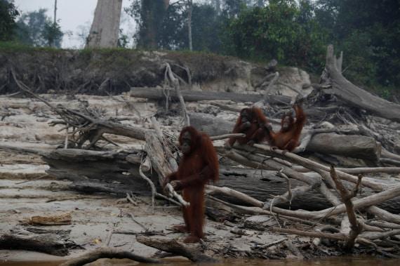 Indonesia: le foreste vanno a fuoco
