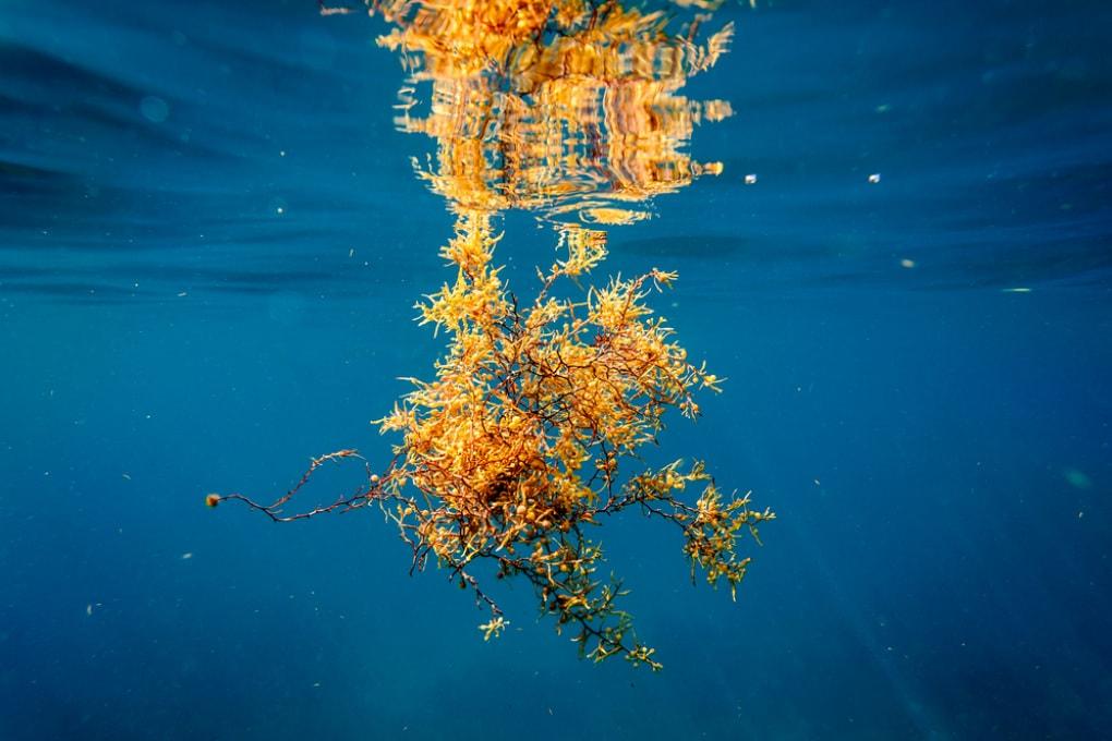 Le alghe sequestra-carbonio