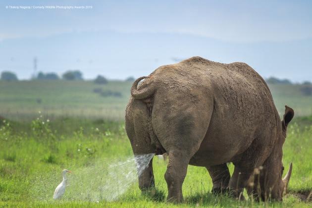 Animali da ridere