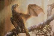 Il dinosauro con le ali di pipistrello