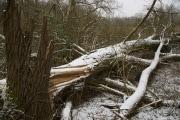 alberi-abbattuti_shutterstock_702315253