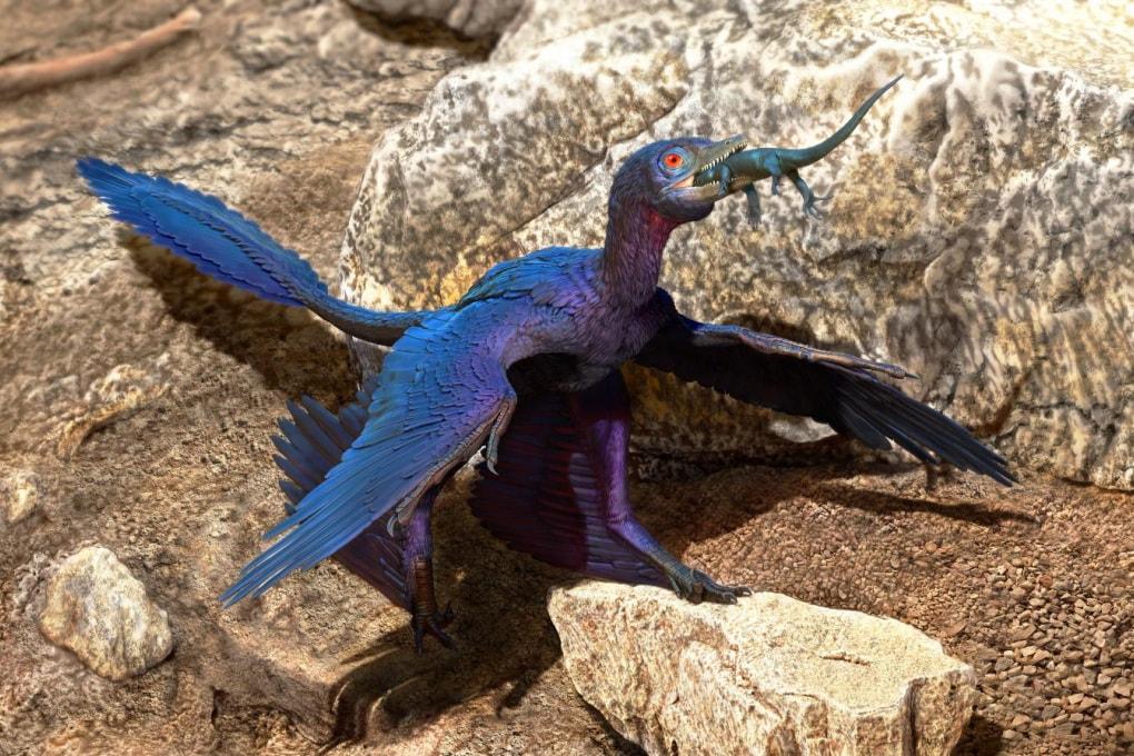 L'ultimo pasto del Microraptor: una nuova specie di lucertola