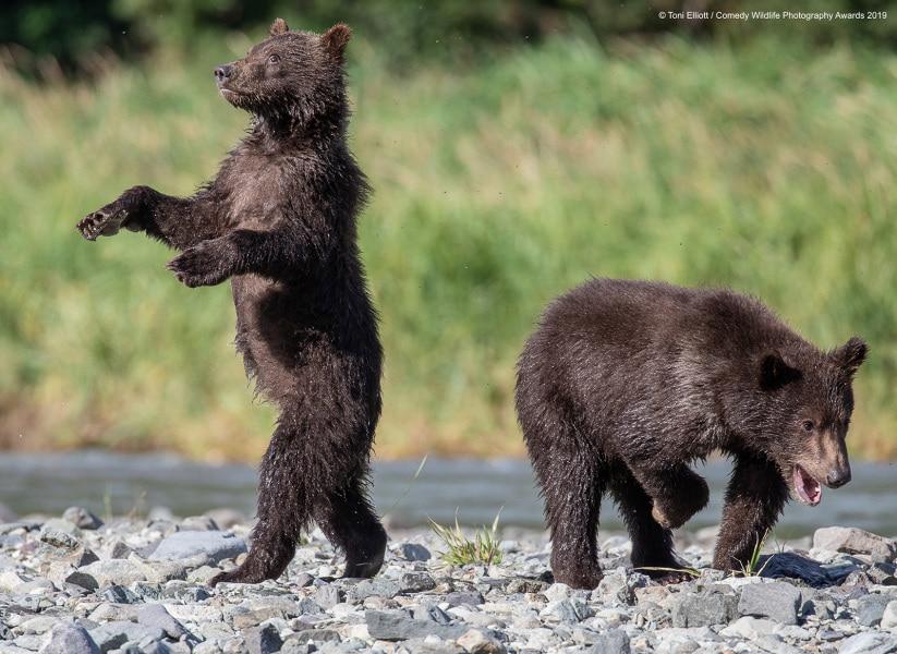 toni-elliott_grizzly-babies_00001296