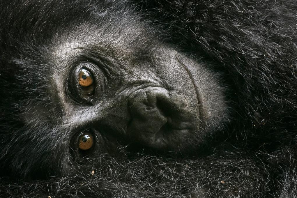 Wildlife Photographer of the Year, è tempo di votare la tua foto preferita