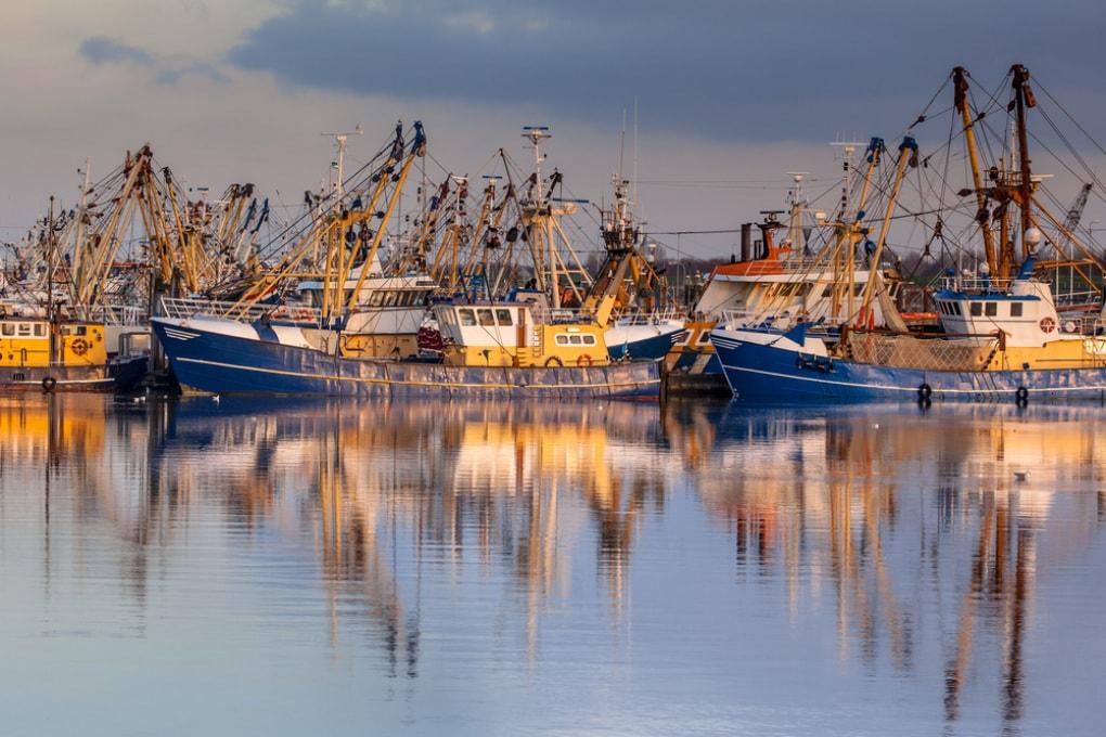 World Oceans Day - Overfishing: la pesca insostenibile