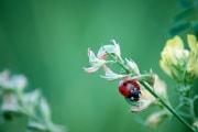 Gli insetti si stanno estinguendo molto più rapidamente di quanto credessimo