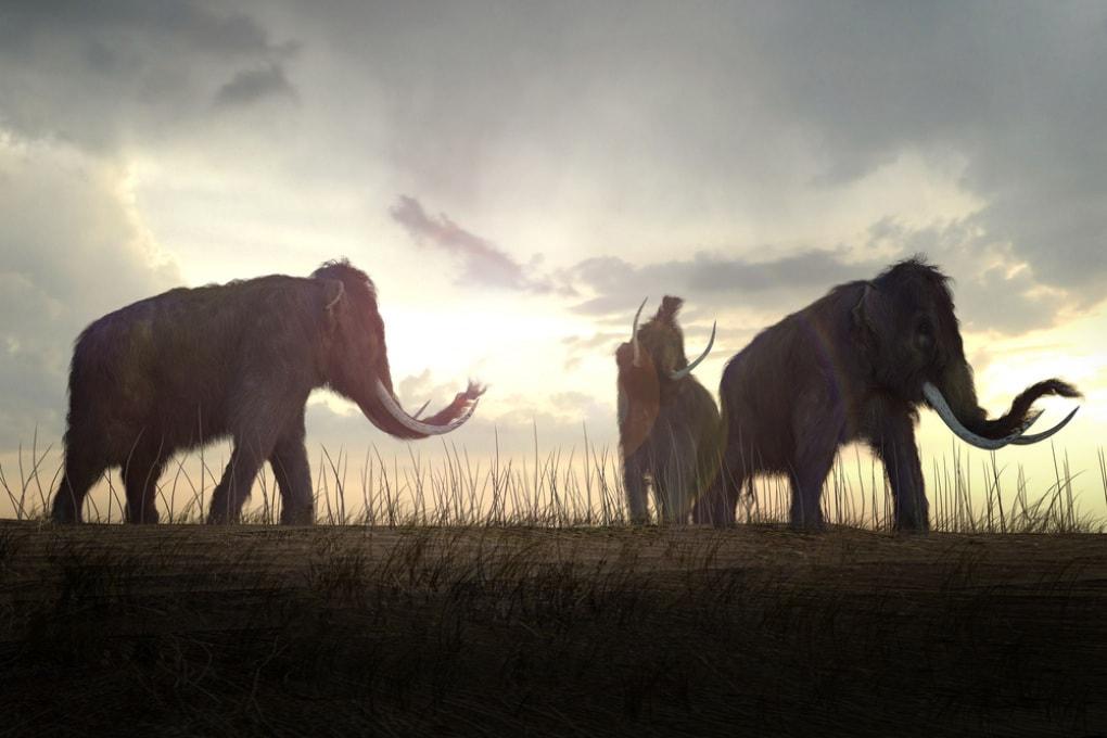 Come morirono gli ultimi mammut lanosi?