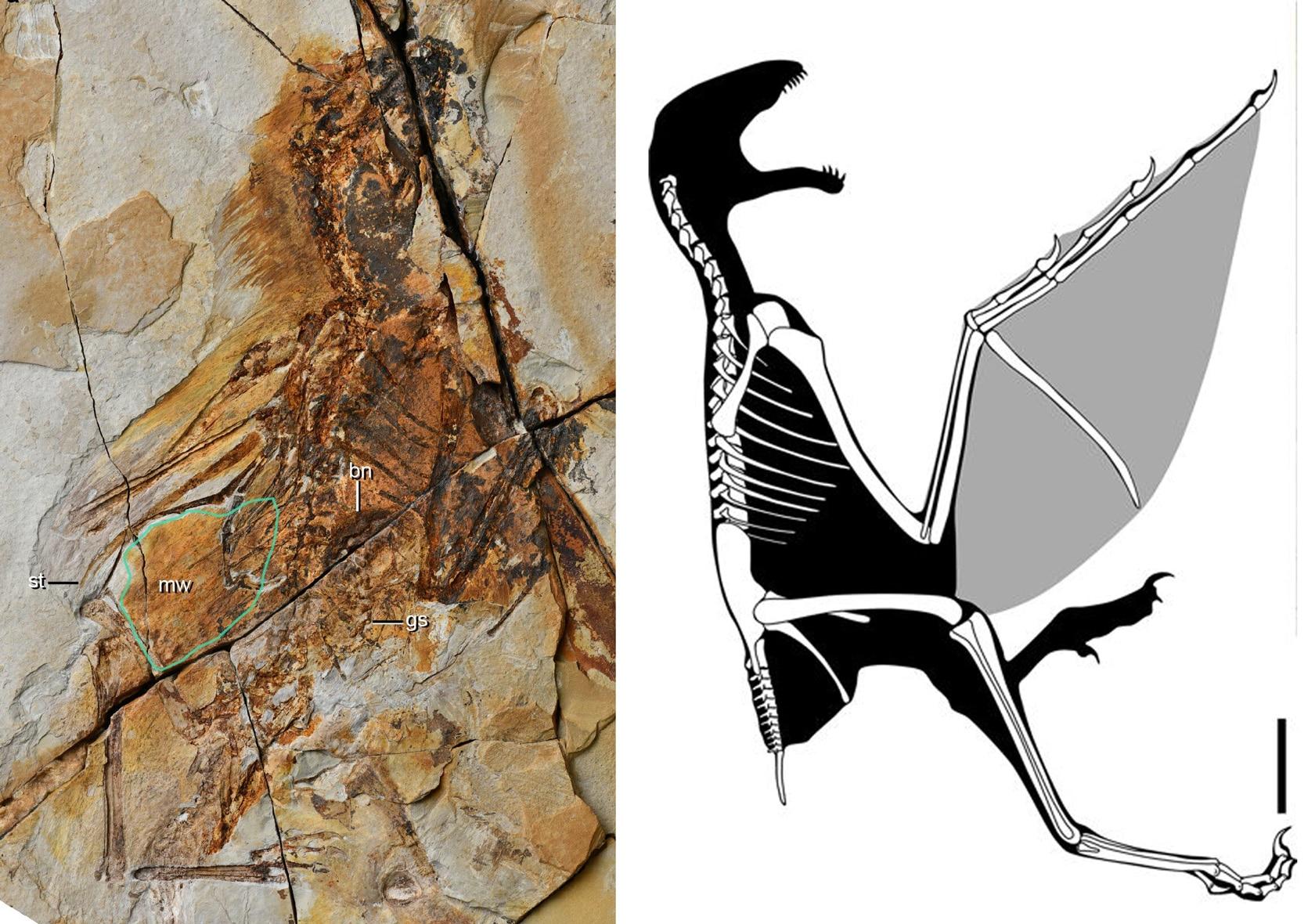 Rocce datati radioattivi e fossili