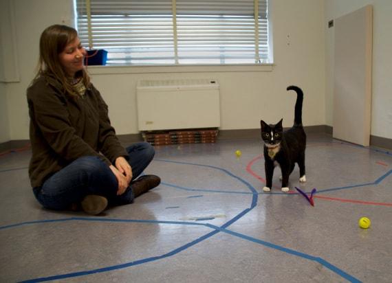 Vita con i gatti