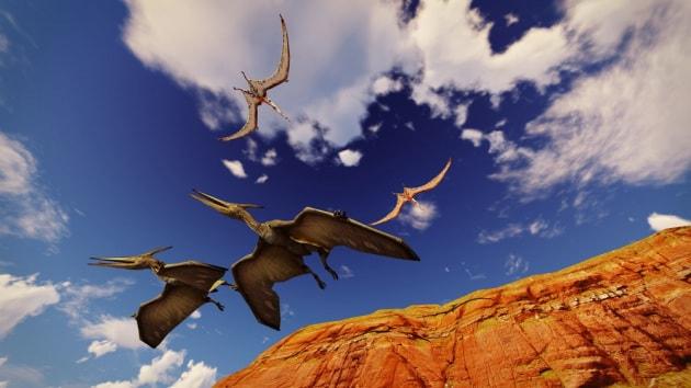 Pterodattili: un nuovo, gigantesco sauro volante