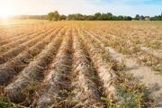Sicurezza alimentare: agricoltura e cambiamenti climatici