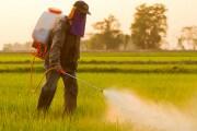 Pesticidi: il disastro dei neonicotinoidi