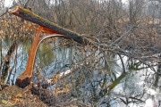 alberi-abbattuti_shutterstock_372153802