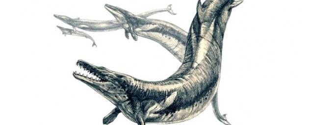 La balena dell'Eocene, divoratrice di balene