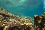 La vita (sottomarina) in diretta
