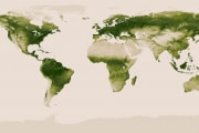 noaa-vegetation-map