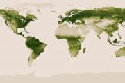 noaa-vegetation-map