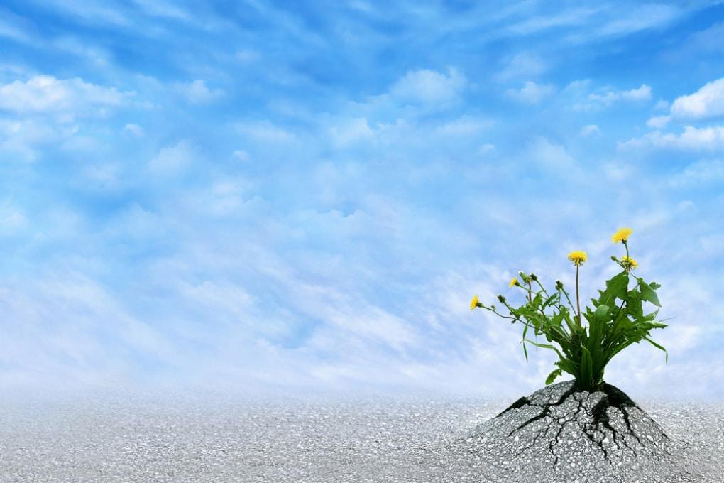 L'ottimismo allunga la vita: è scientifico