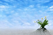 ottimismo-longevita