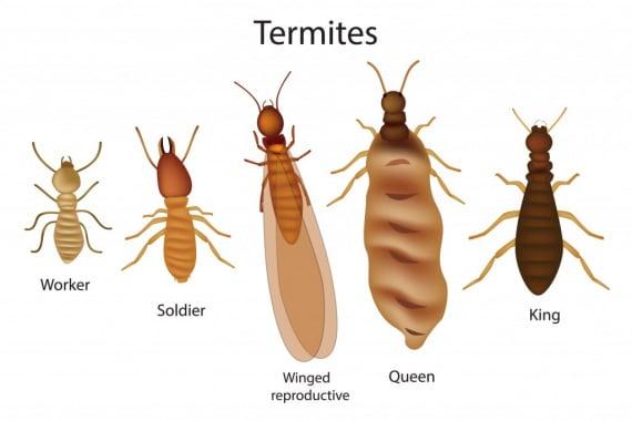 termiti, Isotteri, metano, gas serra, riscaldamento globale, batteri metanotrofi, insetti sociali