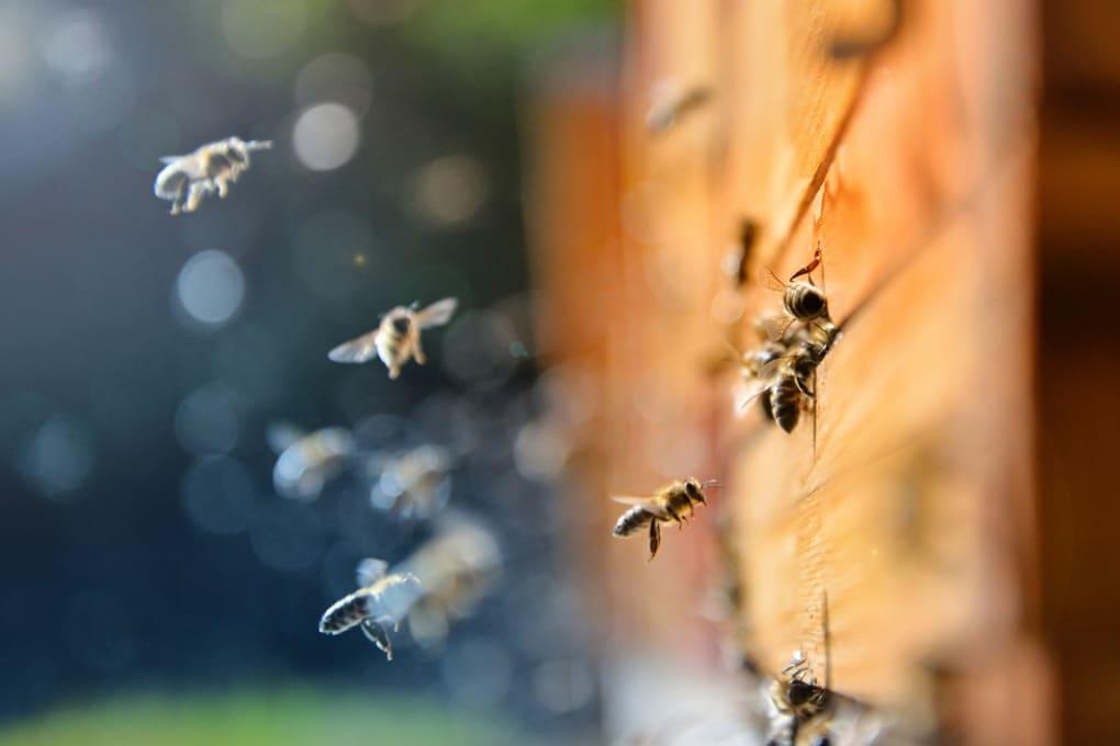 Le api al tempo del riscaldamento globale