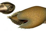 Cambroraster, il rastrello del Cambriano