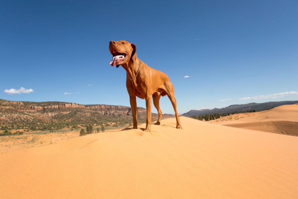 Cani su Marte: sopravvivrebbero? Potremmo portarli con noi?