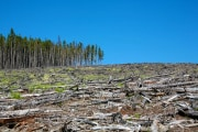 alberi-abbattuti_shutterstock_112834057