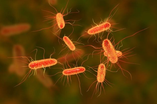 Syn61 è il primo organismo con DNA tutto artificiale