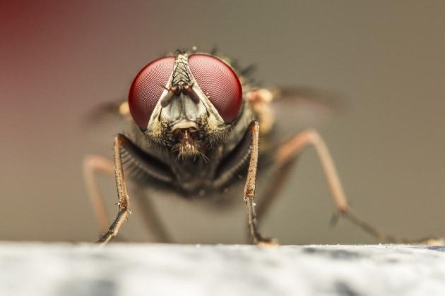 Ospedali: gli insetti volanti portano dentro (e fuori) batteri pericolosi