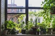 piante-salotto