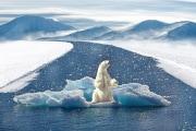 orso-bianco-e-riscaldamento-globale_maxpixel