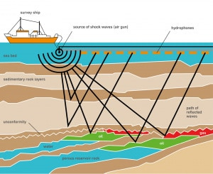 ricerche petrolifere, Donald Trump, Oceano Atlantico, habitat marino, cetacei, società petrolifere