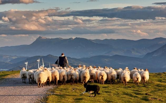 cane-uomo-pecore