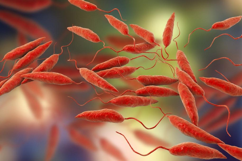Si allarga all'Europa l'area interessata da infezioni tropicali