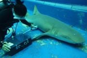squali-embrioni