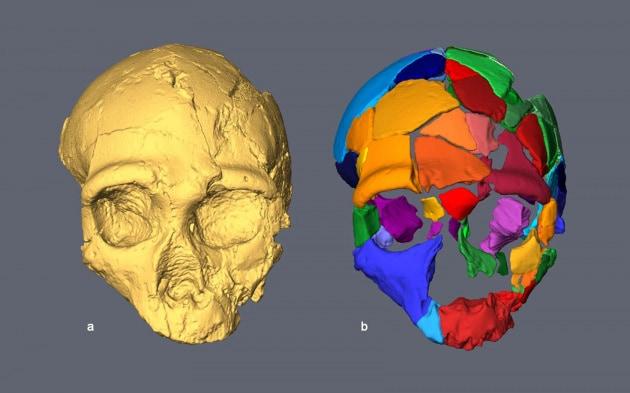 apidima-2_cranio-neanderthal_ricostruzione-0