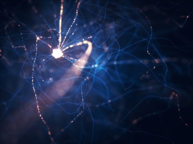 Identificati alcuni schemi neurali che sembrano caratteristici della coscienza